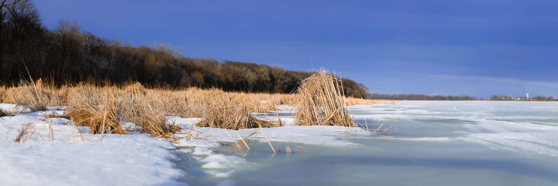 Reeds and cattails make for a unique transition from shore to open water at Rice Lake State Park in Minnesota
